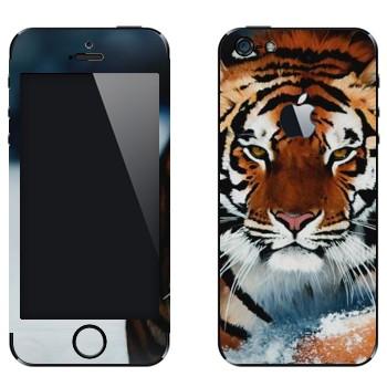 Виниловая наклейка «Амурский тигр» на телефон Apple iPhone 5
