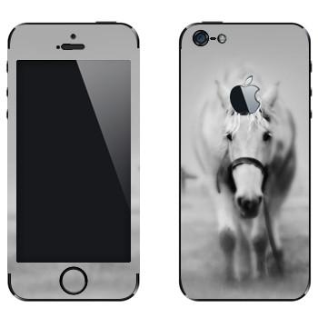 Виниловая наклейка «Белая лошадь в тумане» на телефон Apple iPhone 5