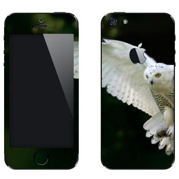 Виниловая наклейка «Белая сова в полете» на телефон Apple iPhone 5