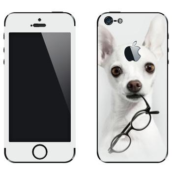 Виниловая наклейка «Белый щенок с очками» на телефон Apple iPhone 5