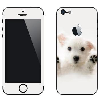 Виниловая наклейка «Белый щенок» на телефон Apple iPhone 5