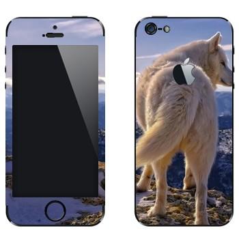 Виниловая наклейка «Белый волк» на телефон Apple iPhone 5