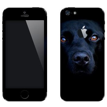 Виниловая наклейка «Черная собака» на телефон Apple iPhone 5