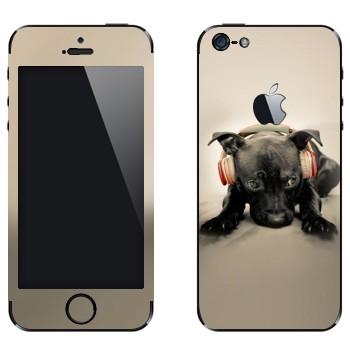 Виниловая наклейка «Черный щенок в наушниках» на телефон Apple iPhone 5