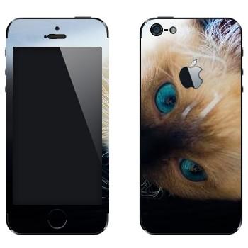Виниловая наклейка «Голубоглазая кошка» на телефон Apple iPhone 5