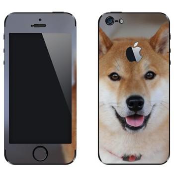 Виниловая наклейка «Карело-финская лайка» на телефон Apple iPhone 5