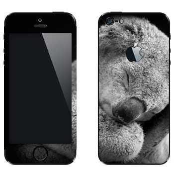 Виниловая наклейка «Коала спит» на телефон Apple iPhone 5