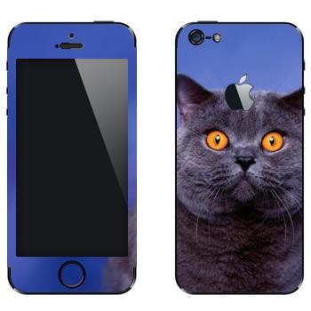 Виниловая наклейка «Кот-Британец» на телефон Apple iPhone 5