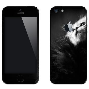 Виниловая наклейка «Котенок черно-белый» на телефон Apple iPhone 5