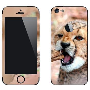 Виниловая наклейка «Котенок гепарда» на телефон Apple iPhone 5