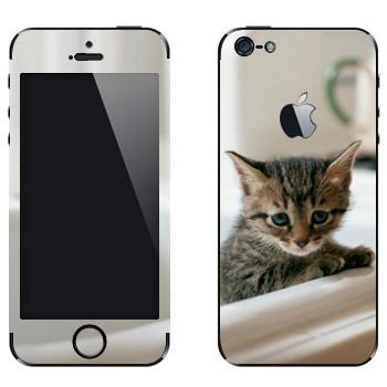 Виниловая наклейка «Котенок в ванной» на телефон Apple iPhone 5