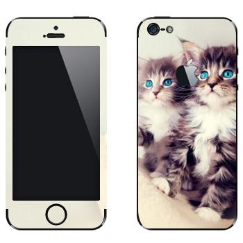 Виниловая наклейка «Котята» на телефон Apple iPhone 5