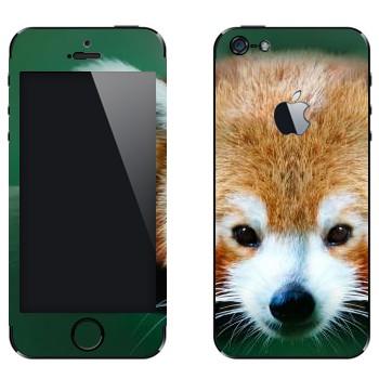 Виниловая наклейка «Красная панда» на телефон Apple iPhone 5