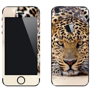 Виниловая наклейка «Леопард наблюдает» на телефон Apple iPhone 5