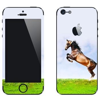 Виниловая наклейка «Лошадь на дыбах на лугу» на телефон Apple iPhone 5