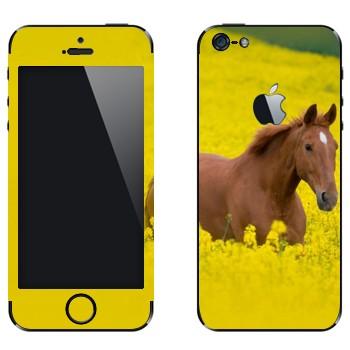 Виниловая наклейка «Лошадь на лугу» на телефон Apple iPhone 5