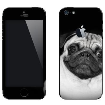Виниловая наклейка «Мопс» на телефон Apple iPhone 5
