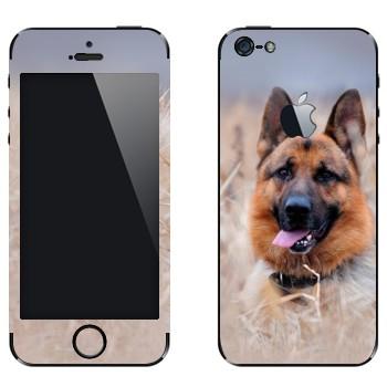 Виниловая наклейка «Овчарка на лугу» на телефон Apple iPhone 5