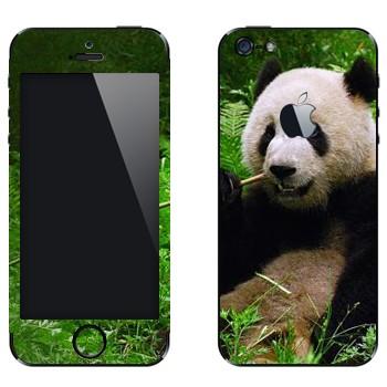 Виниловая наклейка «Панда ест бамбук» на телефон Apple iPhone 5