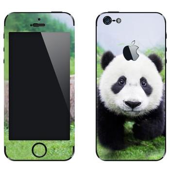 Виниловая наклейка «Панда в природе» на телефон Apple iPhone 5