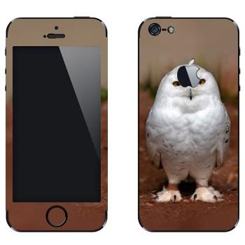 Виниловая наклейка «Полярная сова» на телефон Apple iPhone 5