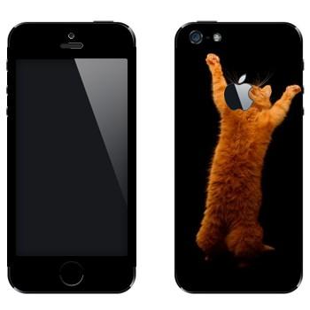 Виниловая наклейка «Рыжий кот стоит на двух лапах» на телефон Apple iPhone 5
