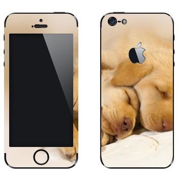 Виниловая наклейка «Щенки спят» на телефон Apple iPhone 5