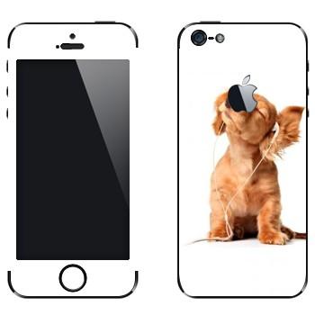 Виниловая наклейка «Щенок в наушниках» на телефон Apple iPhone 5