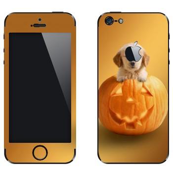 Виниловая наклейка «Щенок в тыкве» на телефон Apple iPhone 5