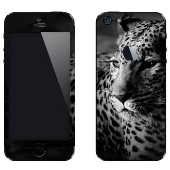 Виниловая наклейка «Сонный леопард» на телефон Apple iPhone 5