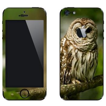 Виниловая наклейка «Сова на ветке» на телефон Apple iPhone 5