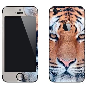 Виниловая наклейка «Спокойный тигр» на телефон Apple iPhone 5