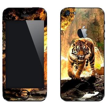 Виниловая наклейка «Крадущийся тигр» на телефон Apple iPhone 5