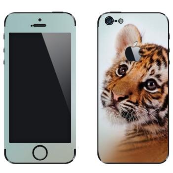 Виниловая наклейка «Тигренок» на телефон Apple iPhone 5