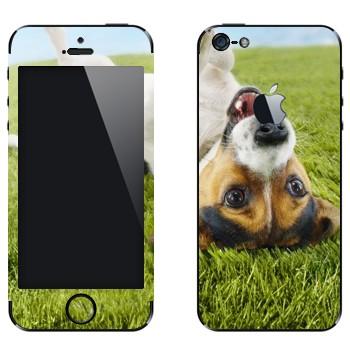 Виниловая наклейка «Веселый щенок на траве» на телефон Apple iPhone 5