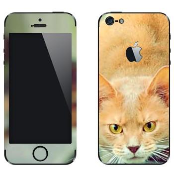 Виниловая наклейка «Злой рыжий кот» на телефон Apple iPhone 5