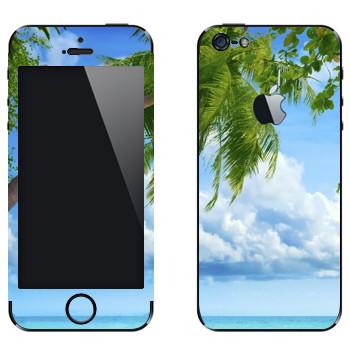 Виниловая наклейка «Пальма на пляже Майами» на телефон Apple iPhone 5