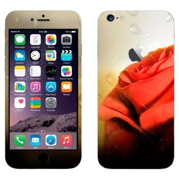 Виниловая наклейка «Алая роза» на телефон Apple iPhone 6 Plus/6S Plus