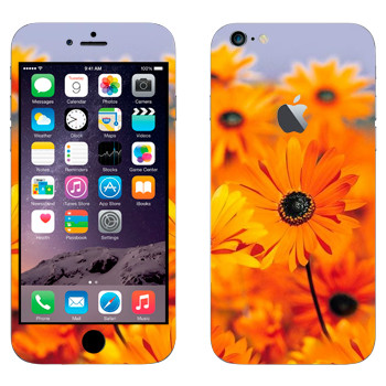 Виниловая наклейка «Оранжевые цветы Диморфотека» на телефон Apple iPhone 6 Plus/6S Plus
