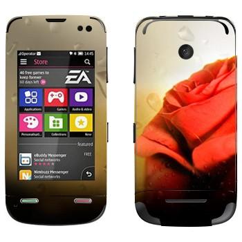 Виниловая наклейка «Алая роза» на телефон Nokia Asha 311