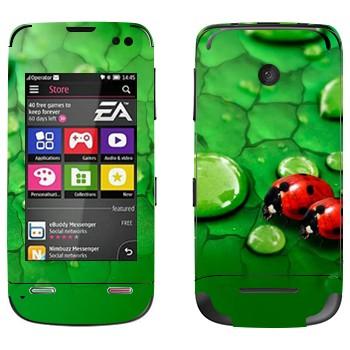 Виниловая наклейка «Божьи коровки на листьях» на телефон Nokia Asha 311