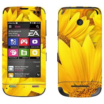 Виниловая наклейка «Желтые ромашки» на телефон Nokia Asha 311