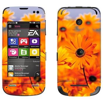 Виниловая наклейка «Оранжевые цветы Диморфотека» на телефон Nokia Asha 311