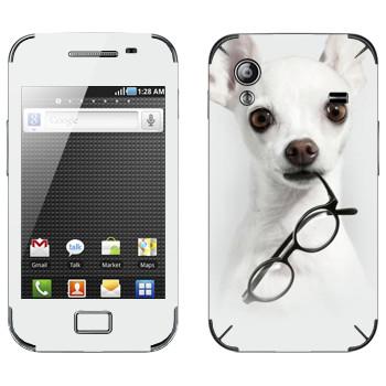 Виниловая наклейка «Белый щенок с очками» на телефон Samsung Galaxy Ace