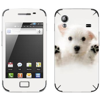 Виниловая наклейка «Белый щенок» на телефон Samsung Galaxy Ace
