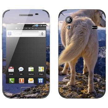 Виниловая наклейка «Белый волк» на телефон Samsung Galaxy Ace