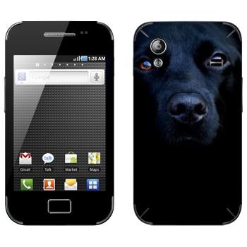 Виниловая наклейка «Черная собака» на телефон Samsung Galaxy Ace