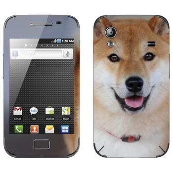 Виниловая наклейка «Карело-финская лайка» на телефон Samsung Galaxy Ace