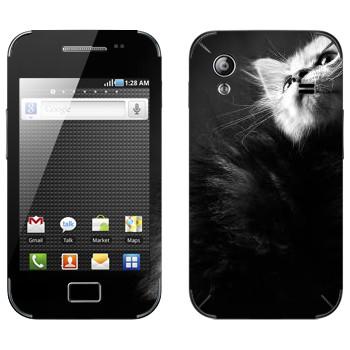 Виниловая наклейка «Котенок черно-белый» на телефон Samsung Galaxy Ace