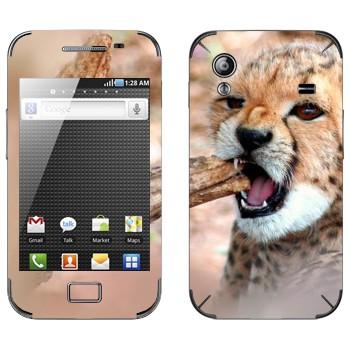Виниловая наклейка «Котенок гепарда» на телефон Samsung Galaxy Ace